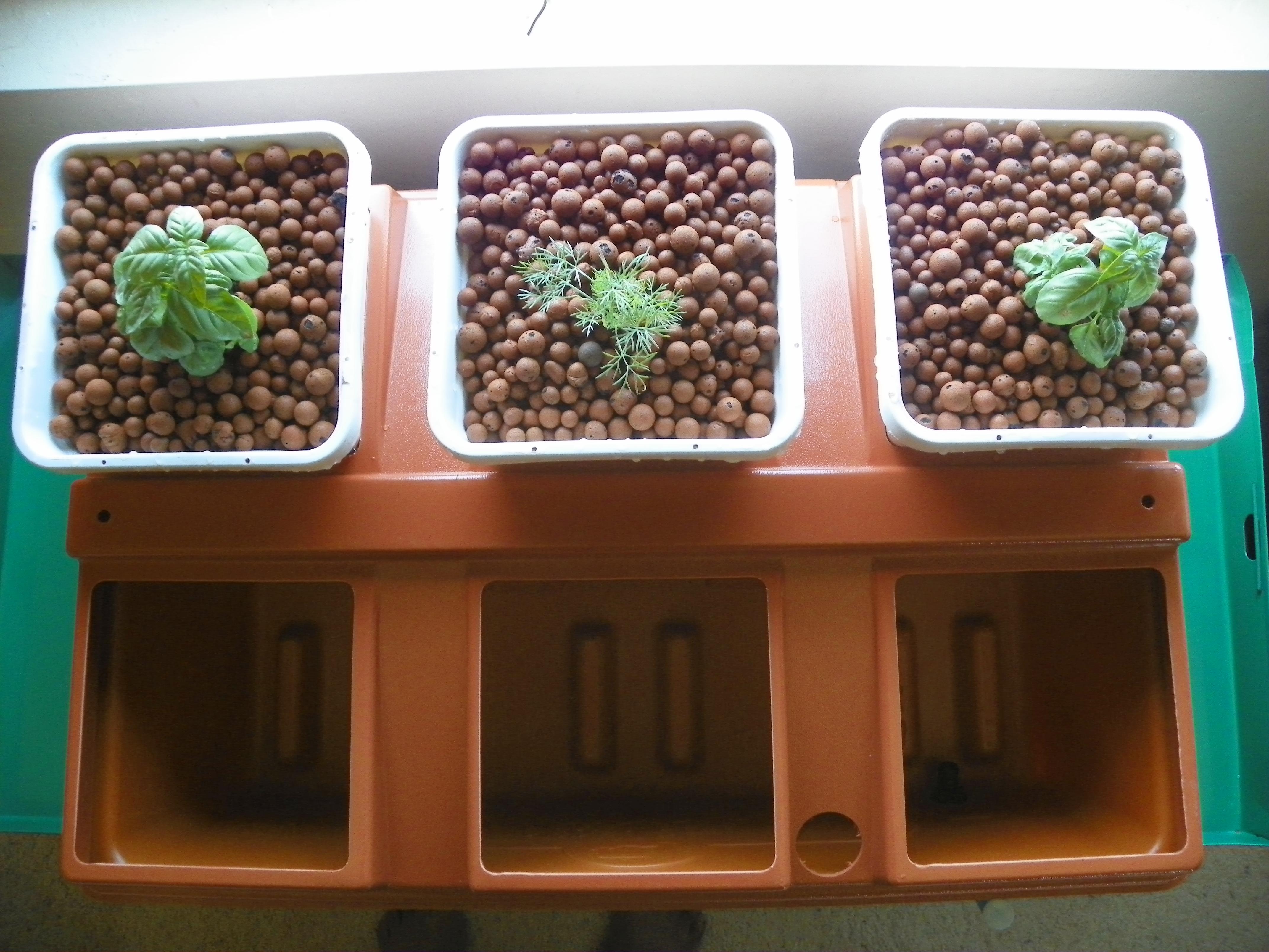 hydroponics – The Chandra Tribune
